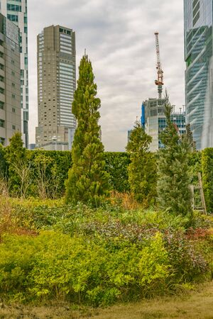Leafy garden and modern tall buildings at background at shibuya district in tokyo city, japan