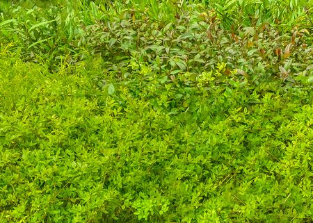 Close up texture photo vibrant green leaves background Фото со стока