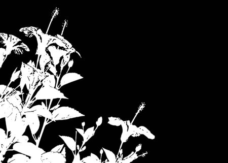 High contrast black and white background with hibscus flowers decoration at left corner