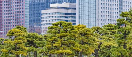 Imperial garden exterior park and modern buildings at background in chiyoda district in tokyo city, japan