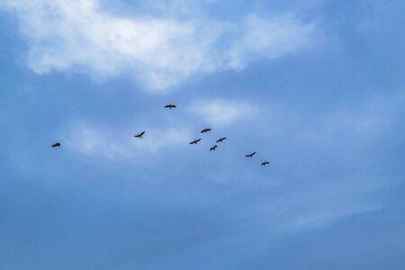 Group of ducks flying at a cloudy day in samborondon district, guayas, ecuador