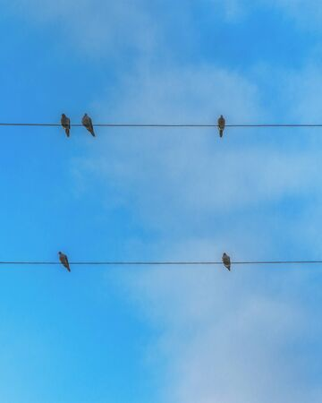 Group of birds standing at telephone cables, samborondon, guayas, ecuador