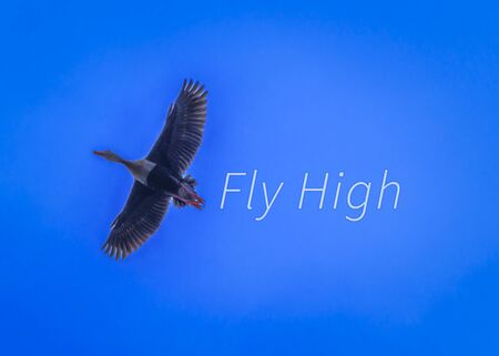Fly high text besides bird flying motivational concept photo.