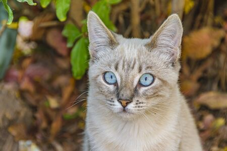 Blue eyes cute grey kitten cat standing over trunk tree Stock Photo