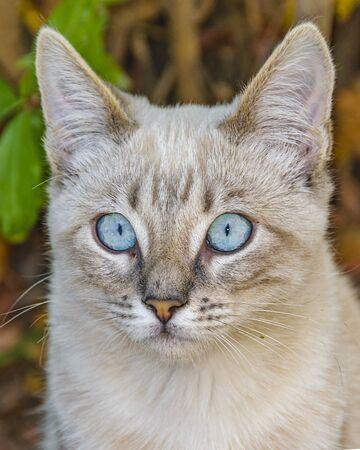Blue eyes cute grey kitten cat standing over trunk tree