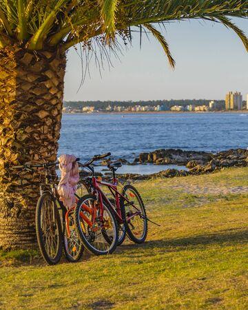 PUNTA DEL ESTE, URUGUAY, FEBRUARY - 2020 - Two bicycles parked at palm tree at mansa beach, punta del este city, Uruguay