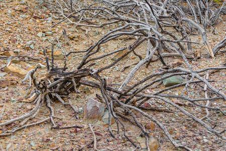 Dry roots ar arid environment, el leoncito national park, calingasta district, san juan province, argentina