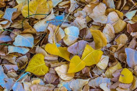 Dry leaves at ground, el leoncito national park, calingasta district, san juan province, argentina