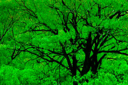 Big trees landscape scene at el leoncito national park, calingasta district, san juan province, argentina