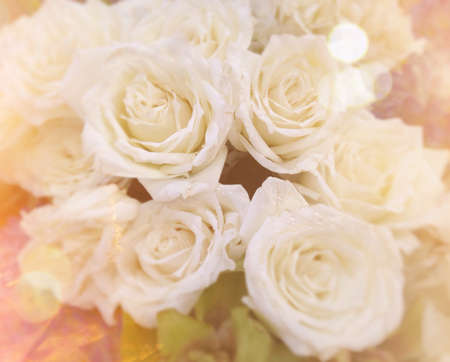 background: White roses on blurred background