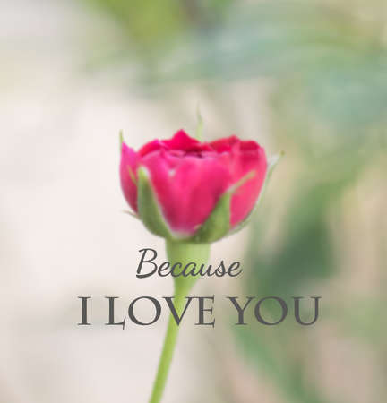 Inspirational and motivation quote on rose flower background Standard-Bild
