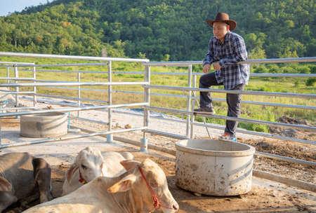 Young asian farmer working in beef cattle farm Standard-Bild