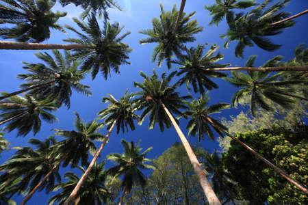 solomon: trees at Kukundu,Solomon islands