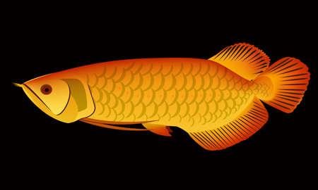 arowana: arowana dragon fish vector