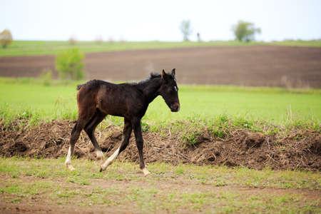horse saddle: horse