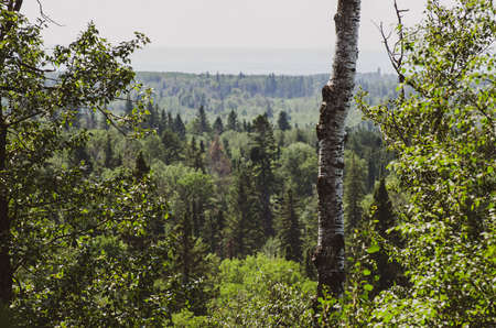 View on the Baldy Mountain Hiking Trail in Duck Mountain Provincial Park, Manitoba, Canada
