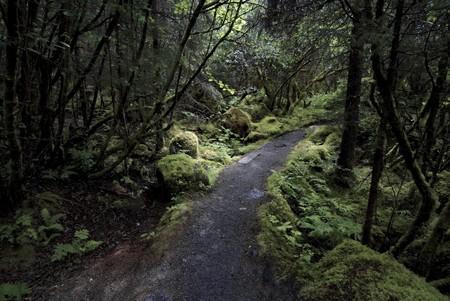 Rainforest park path among trees Stock Photo - 7271891
