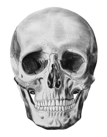 huesos humanos: Una ilustración de cráneo humano aislado en el fondo blanco