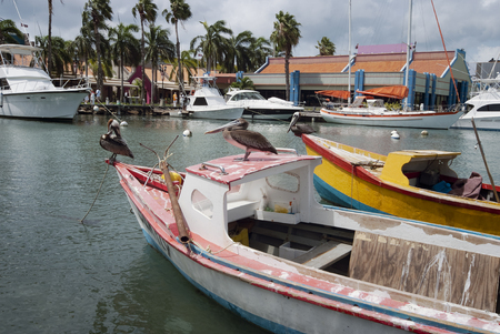 Pelicans on a small fishing boat at Oranjestad Harbor, Aruba, Caribbean islands