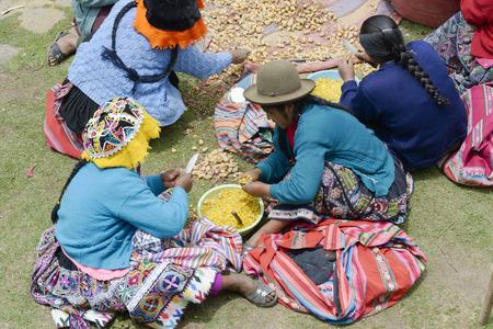 andes mountain: Indigenous women cutting potatoes for a local wedding ceremony, Paru Paru, the highest-altitude community in La Parque de la Papa, Andes Mountain, Peru