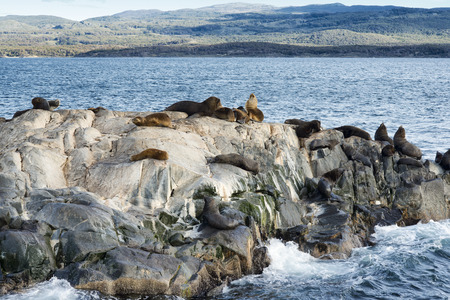 Colony of Sea Lions resting on a small island on the Beagle Channel, Tierra Del Fuego, Argentina Stock Photo