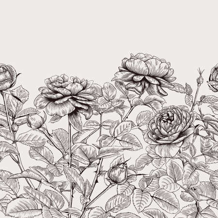 Vintage seamless border with roses. Floral pattern. Botanical vector illustration. Black and white. Иллюстрация