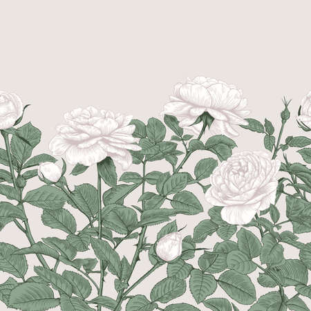 Vintage seamless border with white roses. Floral pattern. Botanical vector illustration. Gentle pastel background.