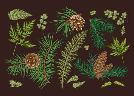 Christmas set with coniferous branches and greenery. Vector illustration. Dark background and colorful pattern.