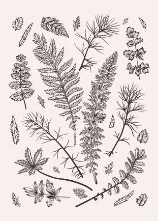 Set with leaves. Vector illustration. Design elements. Black and white.