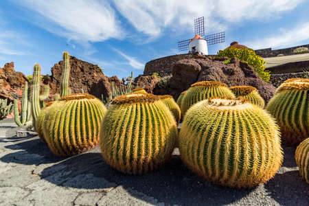 Some cactus and a windmill on the top of the hill in a cactus garden in Lanzarote, Spain Stock Photo