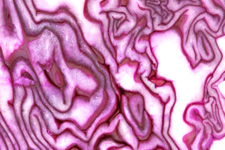 innards: Inside raw red cabbage texture pattern texture close up view