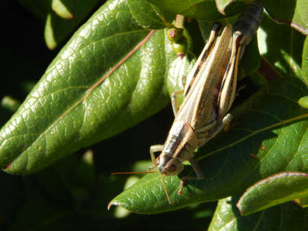 differential: What I believe to be a Differential Grasshopper Stock Photo