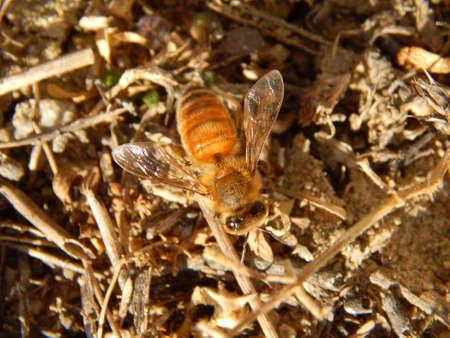 Honey bee looking for food