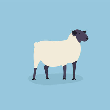 Sheep vector illustration Çizim