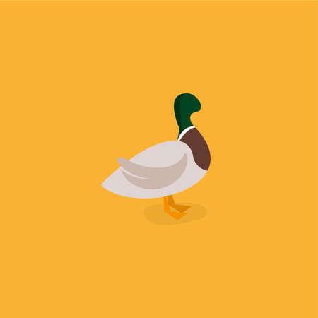 Duck vector illustration