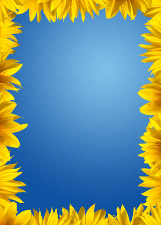 Sunflower border photo