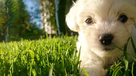 lucas: Puppy Lucas