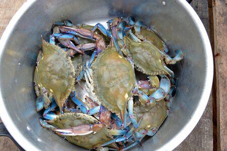 Blue crab. 스톡 콘텐츠