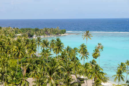 moorea: Moorea A palms�forest in the beach