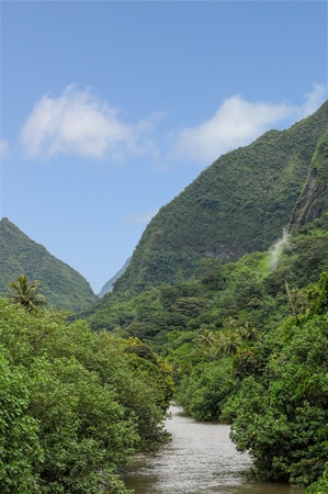 luxuriant: A wide river in the luxuriant island of Tahiti in the French polynesia