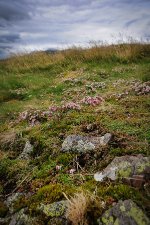 loch lomond: Typical vegetation of the highland in Scotland.Near the Loch Lomond