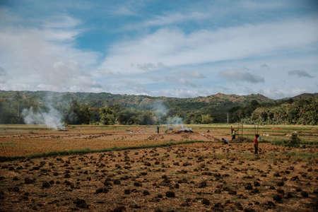people working crops on the island of bohol Foto de archivo