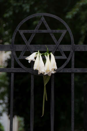 flowers placed on a Jewish star in the synagogue of budapest.