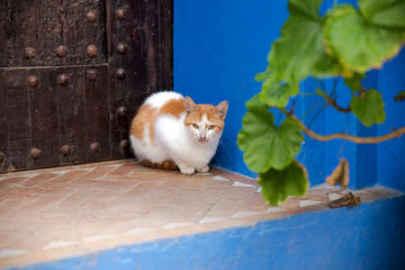 Wanderlust. Stray Black Cat in Blue Beautiful Touristic City Chefchaouen Medina Landscape. Popular Tourism Destination Morocco Town View. Travel Vertical Background Image