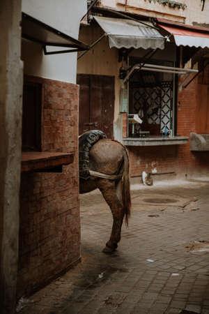 Donkey on old streets of Fez medina, Morocco. Foto de archivo
