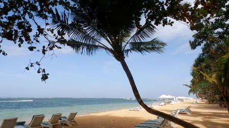 sanur: Coconut tree provides some shade on Sanur beach, Bali  Stock Photo