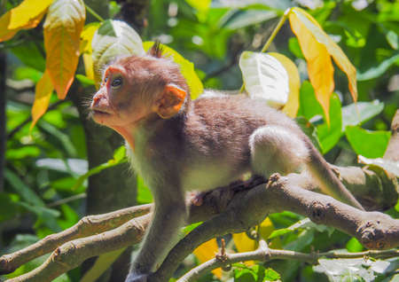Baby Balinese long-tailed monkey in the rain forest Stock Photo