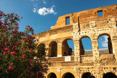 The Colosseum behind some beautiful flowers, Rome, Italy