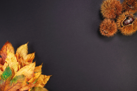 chestnut hedgehog top view