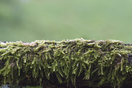 moss forest leaves